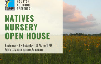 Natives Nursery Open House