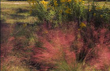 Gulf Muhly and Sunflowers make a perfect, colorful combination.