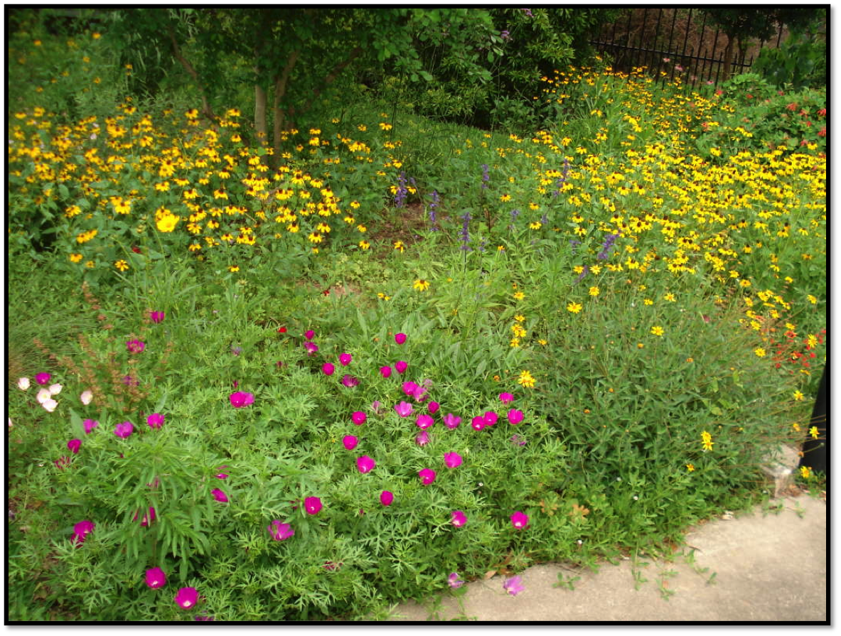 http://www.birdfriendlyhouston.org/wp-content/uploads/2017/01/A-lover-of-wildflowers.png
