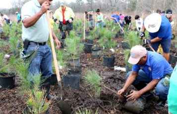 HPARD restores forest and prairies in local parks.