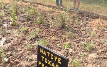 Native Texas Prairie Plots