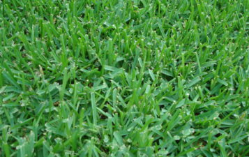 Learn about Lawn
