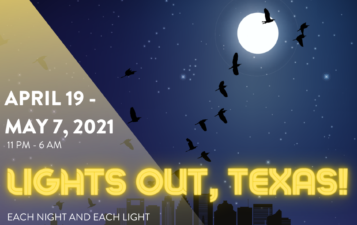 Lights Out for Birds